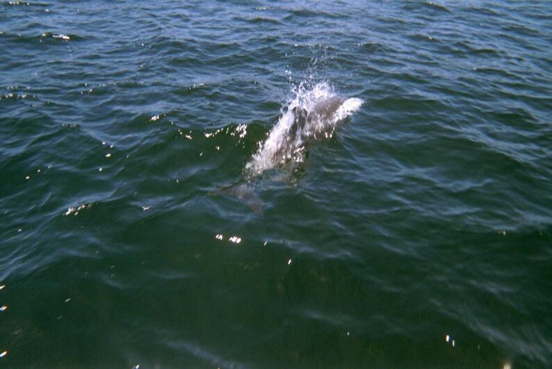 Croisiere-venezuela-2002-dauphins