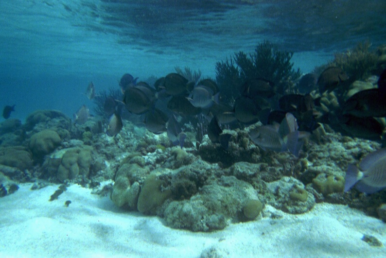 croisiere-venezuela-2002-fond-marin