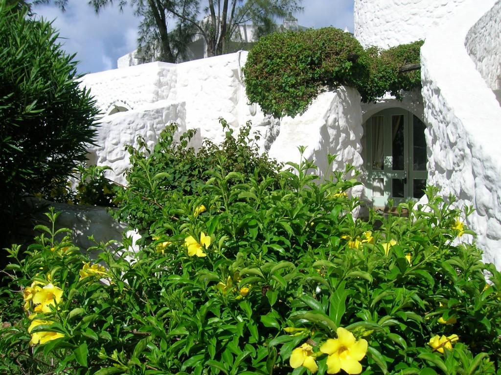casuarina-ile-maurice-fleurs