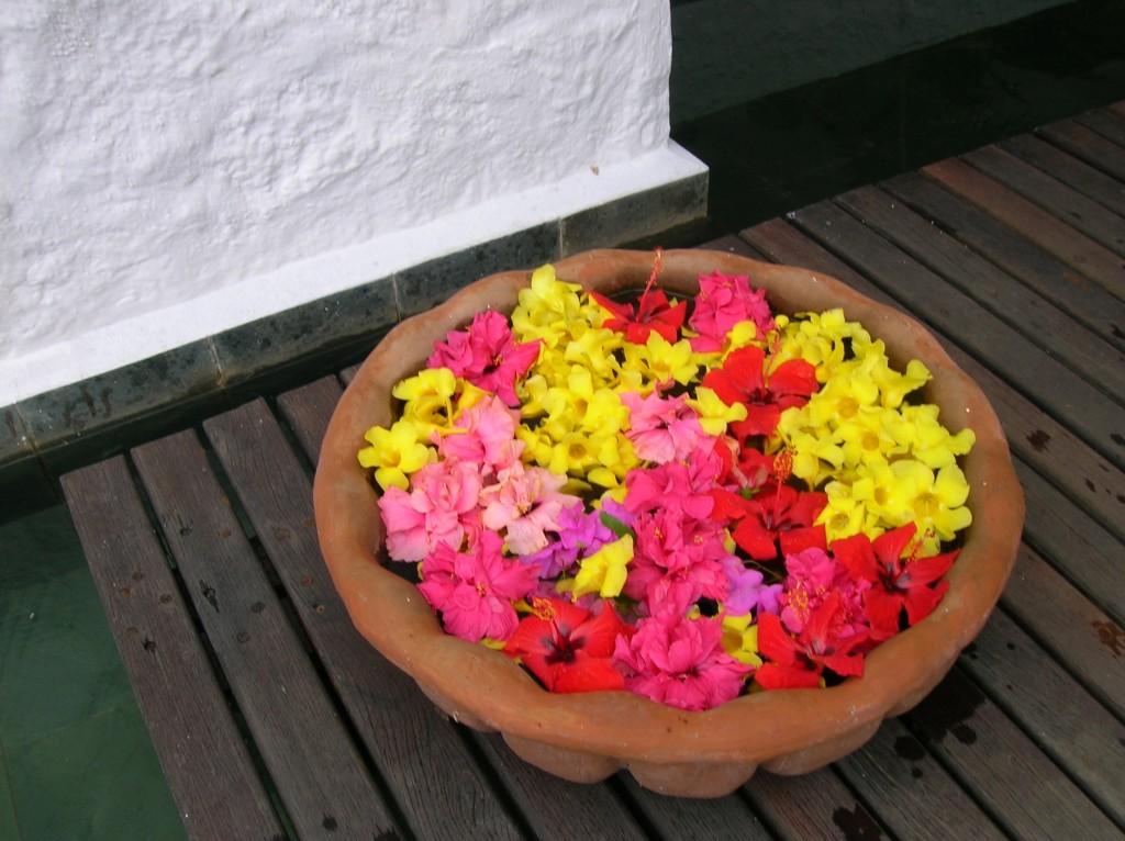 casuarina-ilemaurice-fleurs