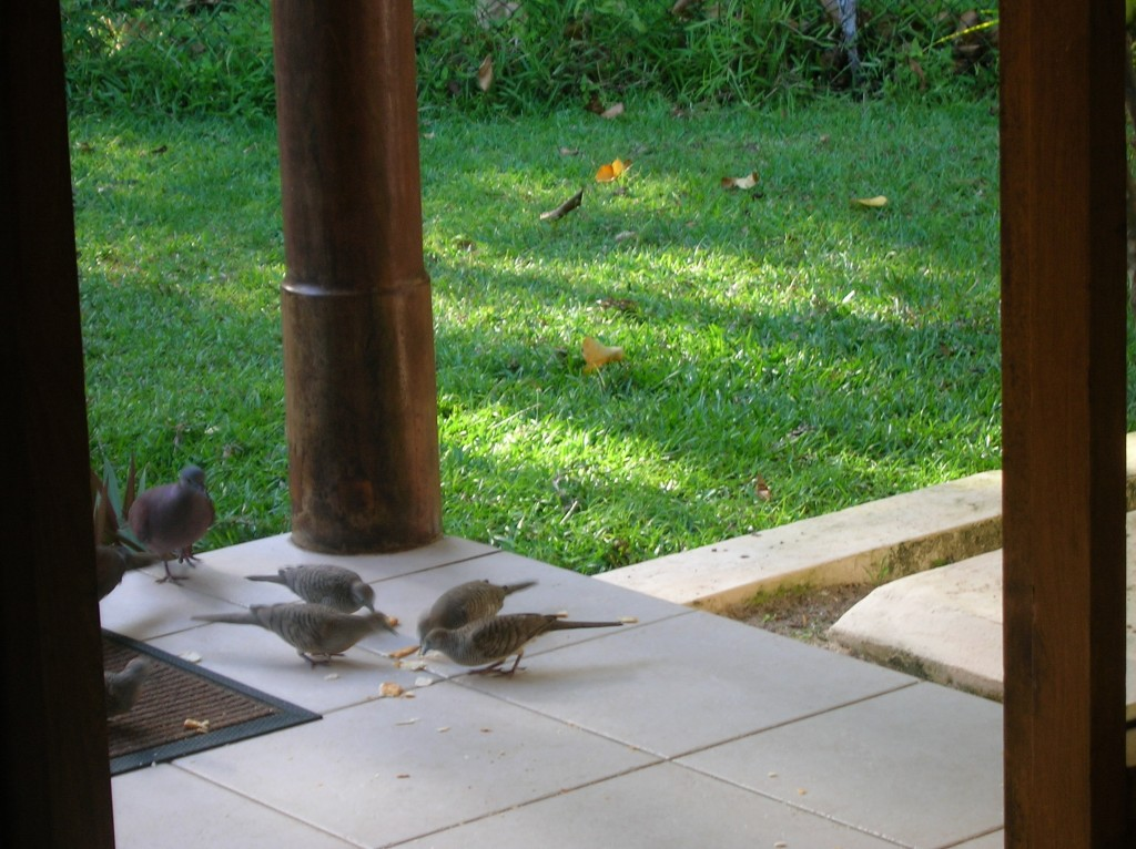 villa-dor-oiseaux-seychelles-praslin-2007