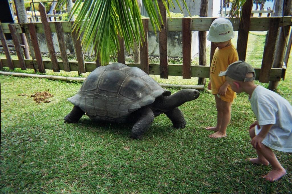 villador-tortues-seychelles-2007