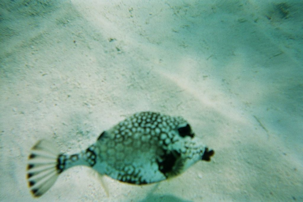 caraibes-janv2008-en-cata-poisson-antilles