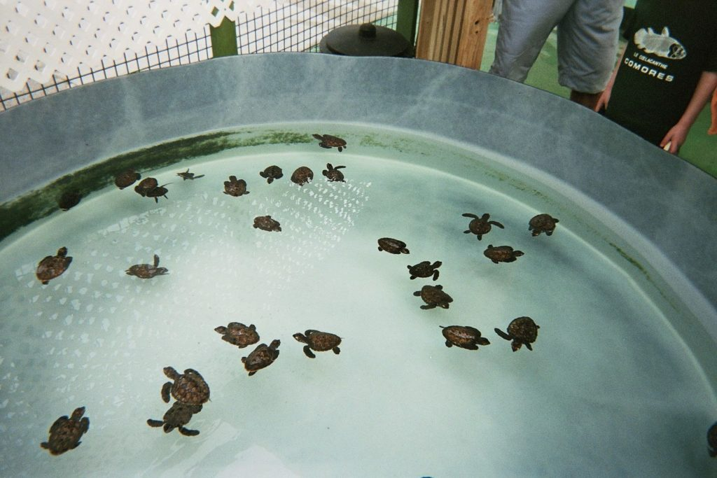 caraibes-janv2008-reserve-tortues-bequia