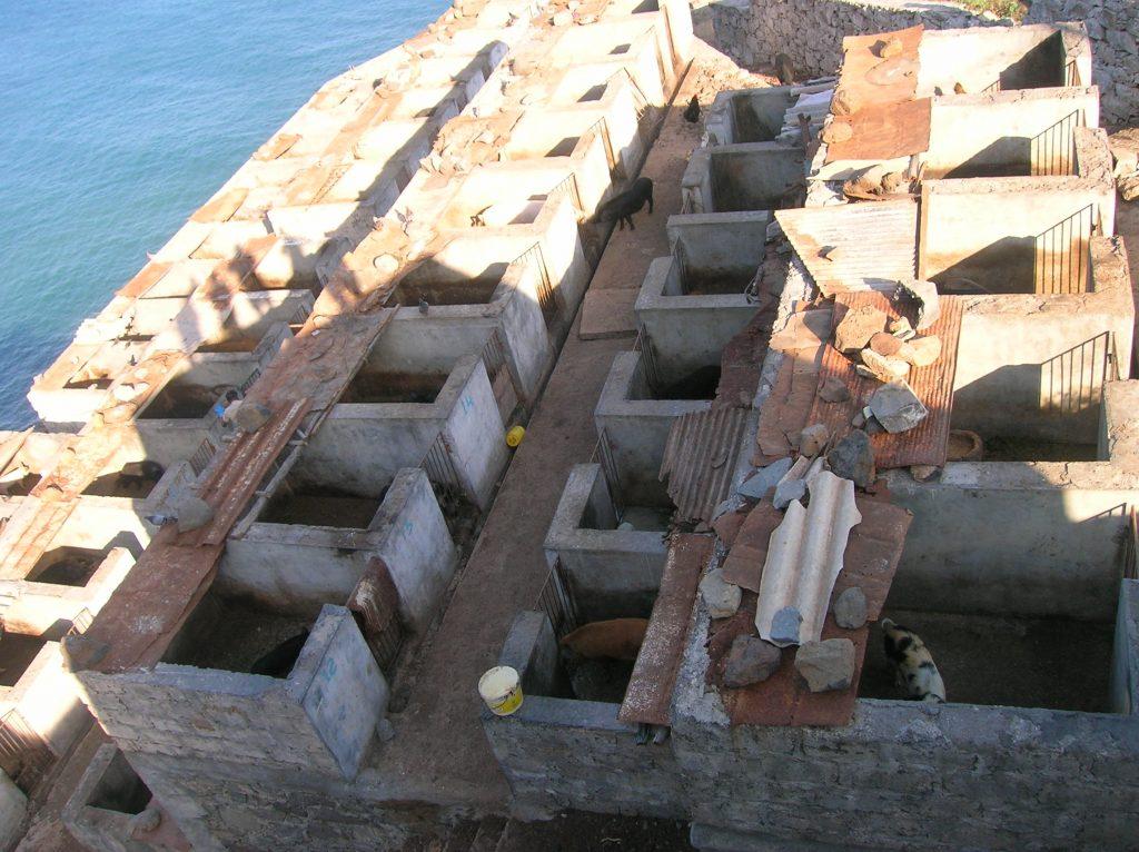 bateau-cap-vert-juin2009-santa-antao-home-cochon