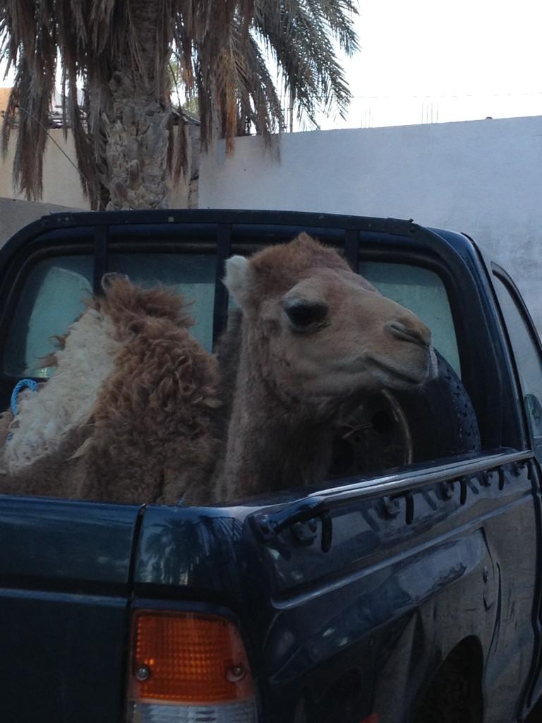 desert-tunisien-j5-dromadaire-douz