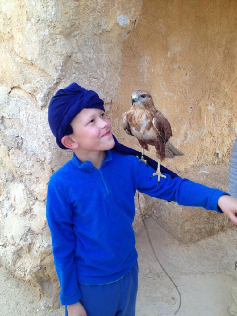 desert-tunisien-j5-faucon-jules