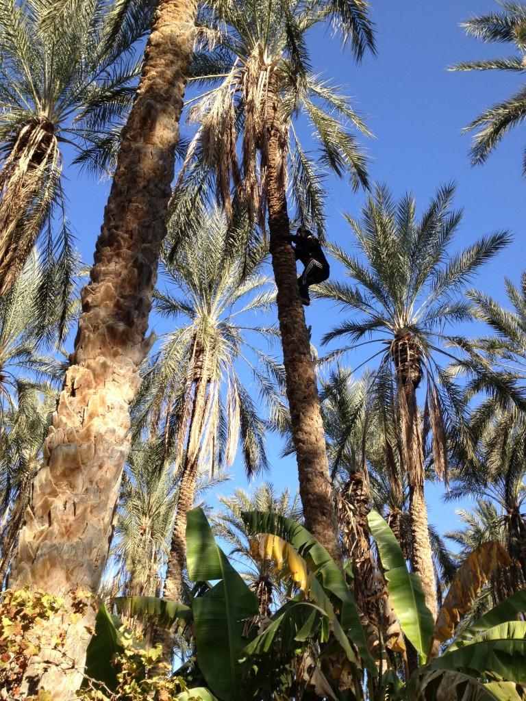 desert-tunisien-j6-homme-palmier-tozeur