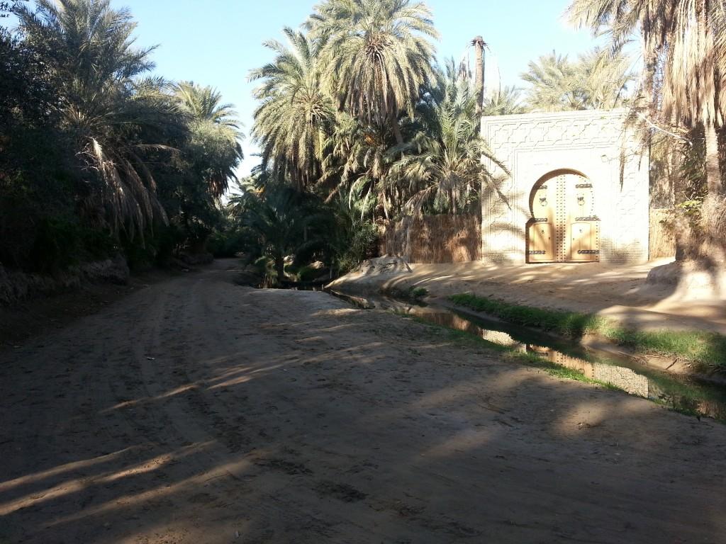 desert-tunisien-j6-palmeraie-tozeur