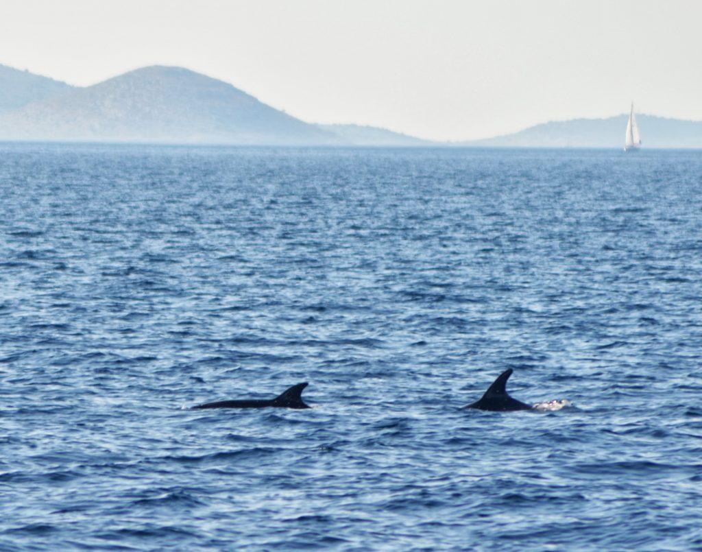 croisiere-ete2013-croatie-dauphins