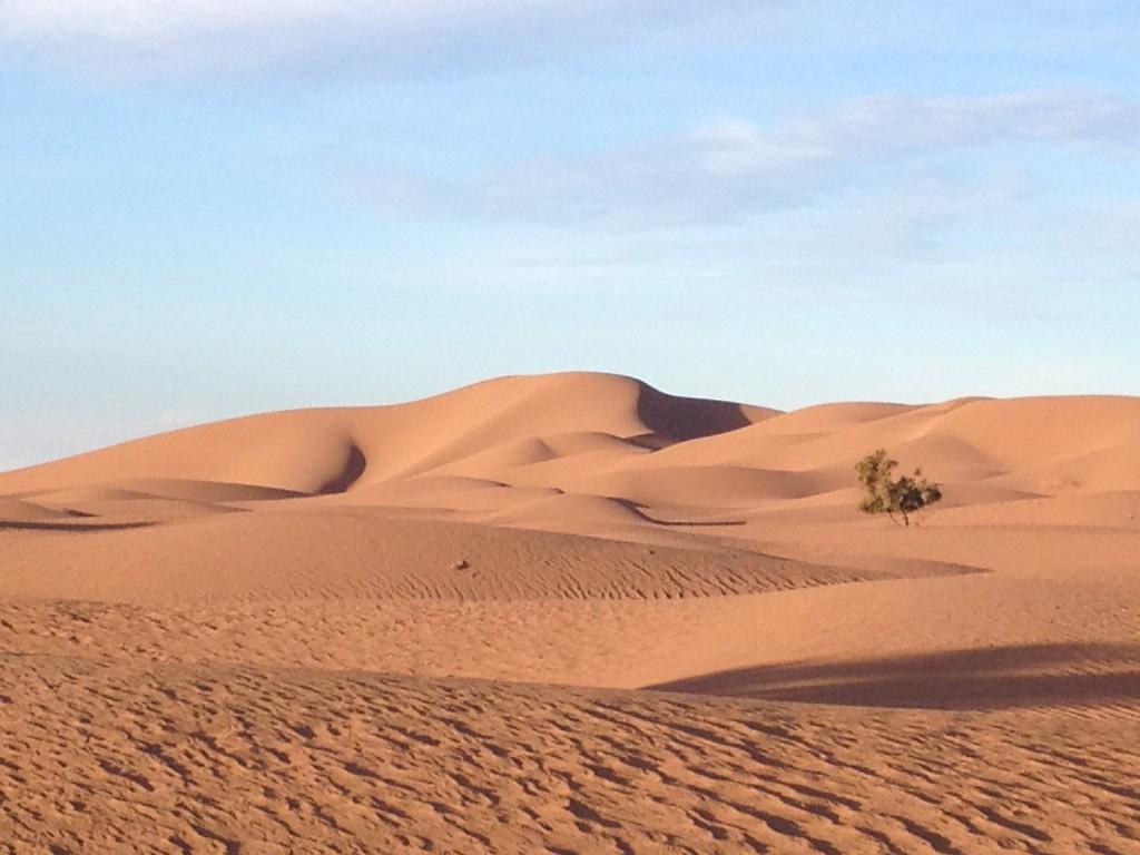 trek-j5-bonne-annee-ds-desert
