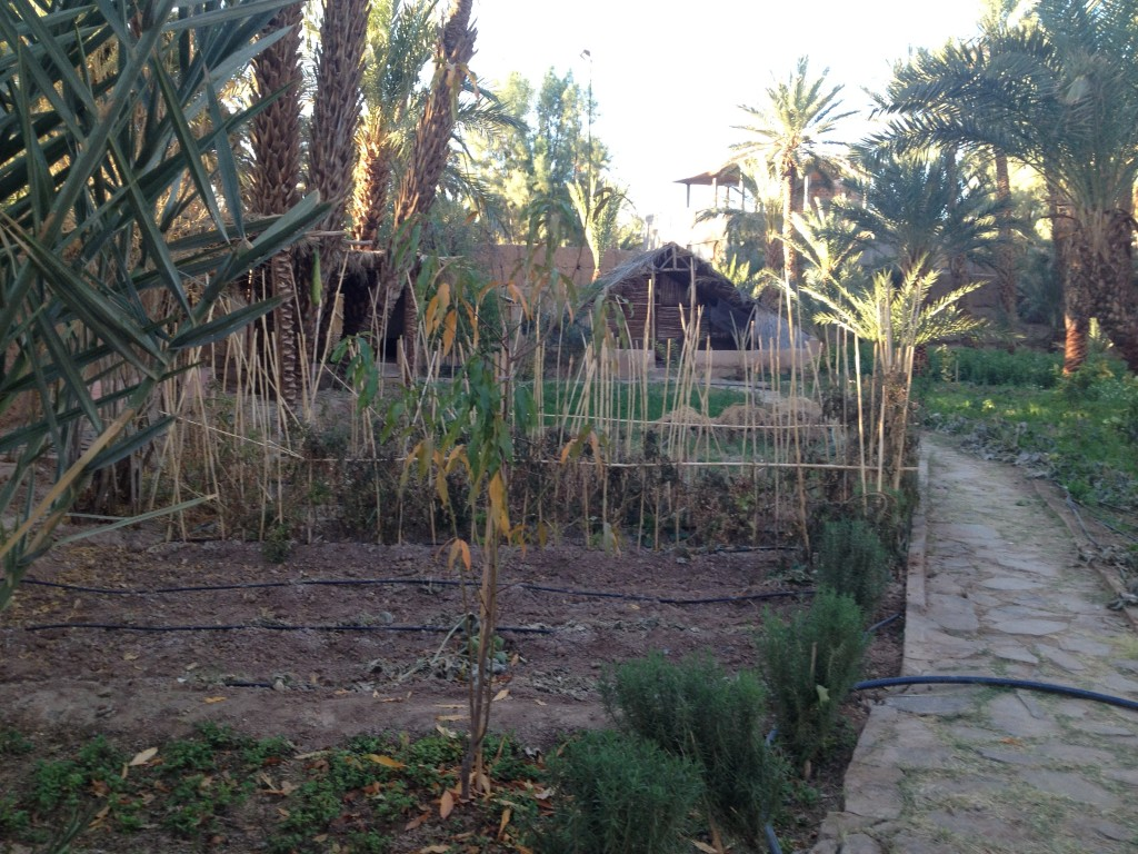 trek-j6-jardin-potager-riad-tabhirte