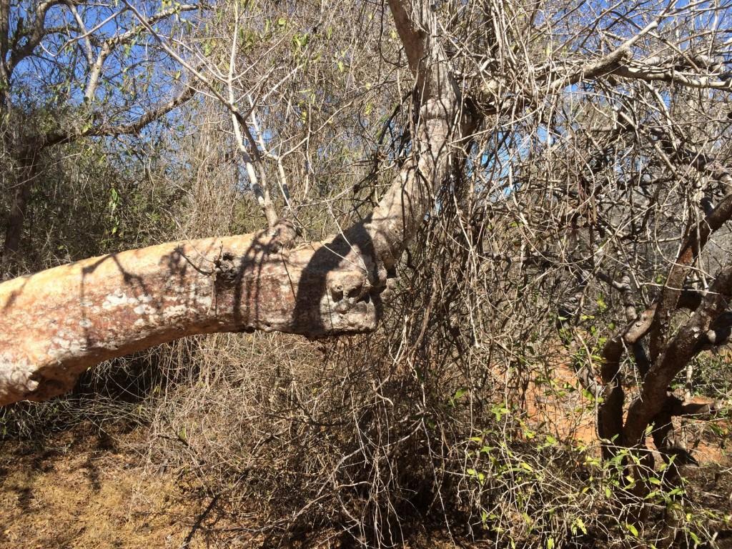 j12 baobab-rhino