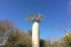 j10-baobab