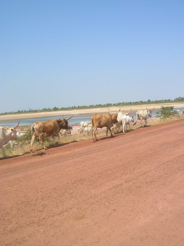 RIDS-nov-2008-excursion-piste-afrique