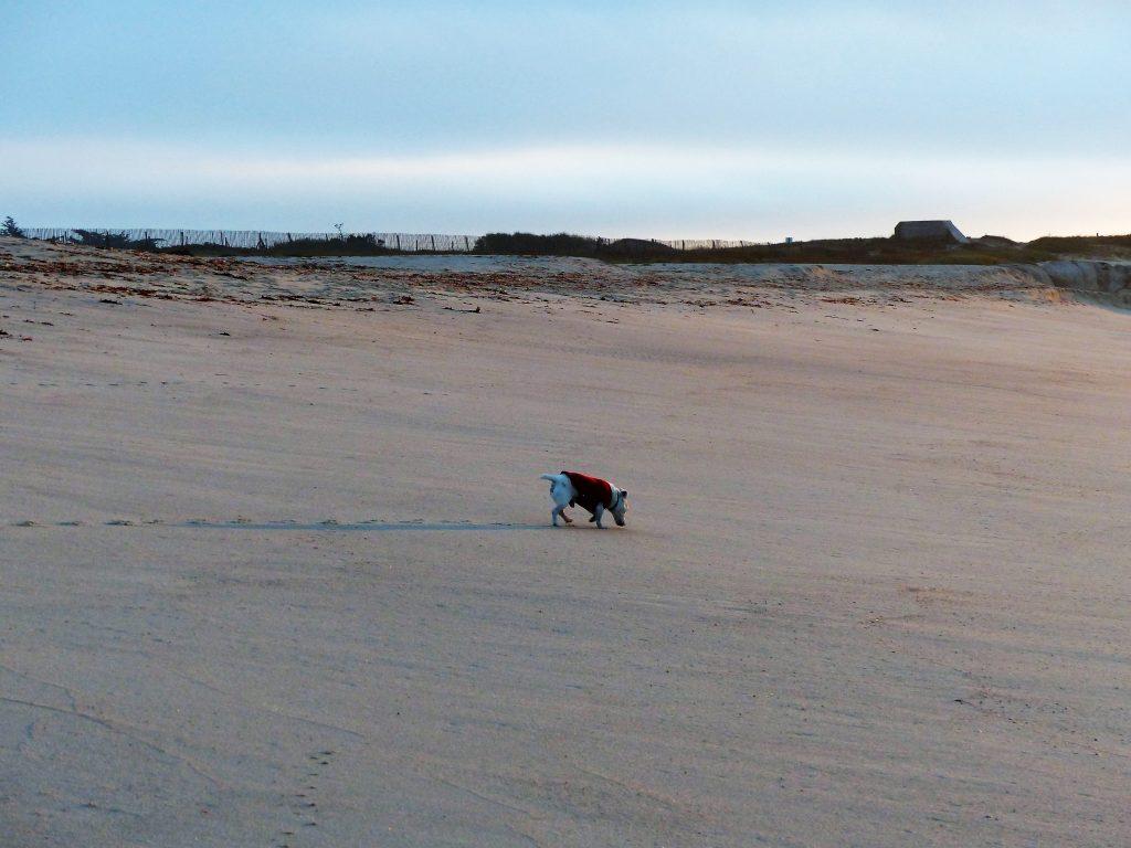j2-plage-reun-bretagne-oct-2016-28