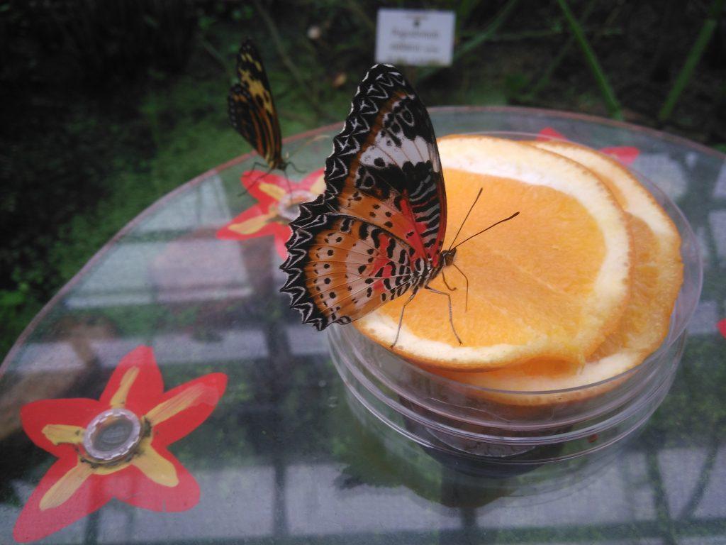 j2-dej-papillons-botique-munich-2016-noel