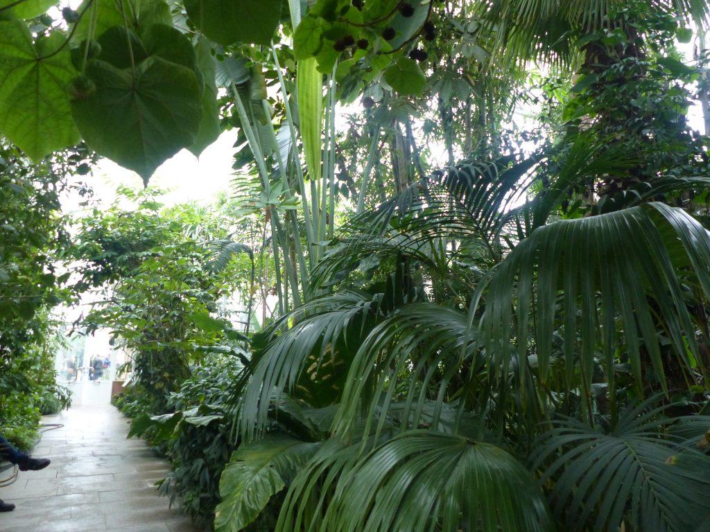 j2-jardin-botanique-tropical-munich-dec-2016