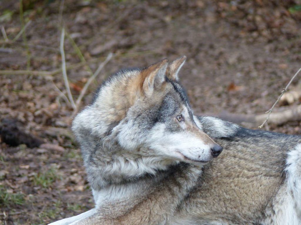 j6 loup zoo munich noel 2016