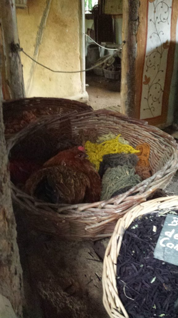 2014-mai-poules-ds-laine-guedelon-ferme-MFV