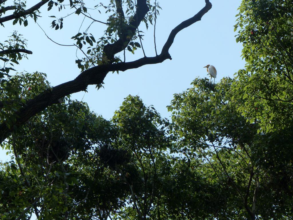 7juin17-MFV-ningbo-universites-oiseaux
